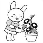 あさがおとウサギ1